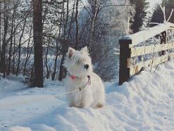 032018_Kerttu_talvipaiva